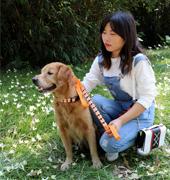 WS       万顺织带.宠物带