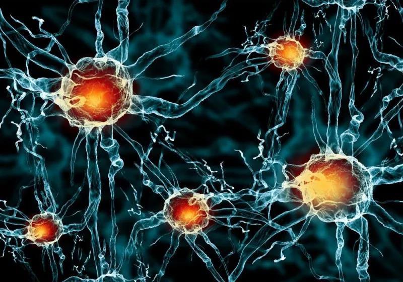 数字神经系统