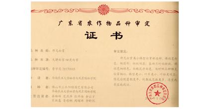 阳特园艺荣获白掌成果登记证书2