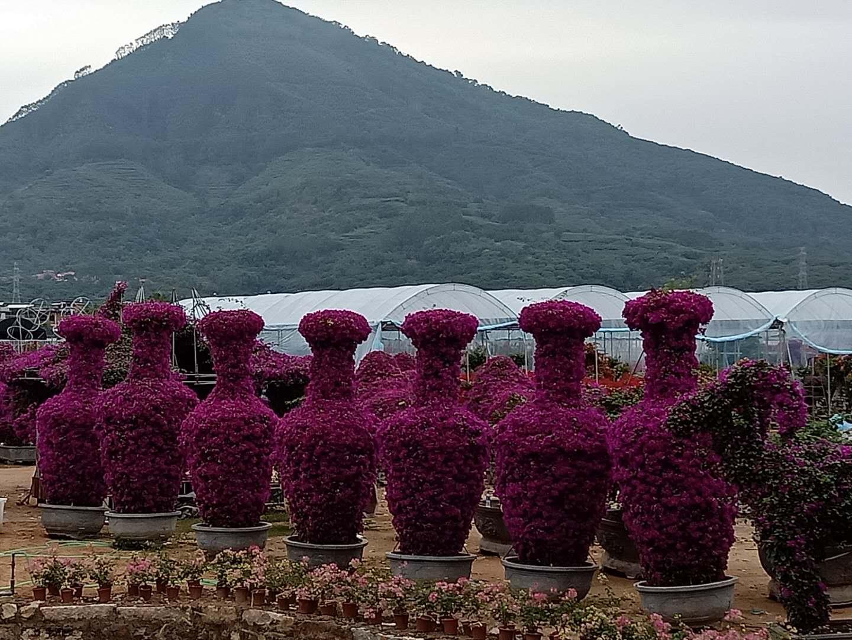林婷园林.造型紫花